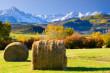 ist1_2348334-preparing-hay