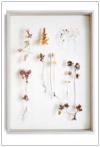Dried Botanicals 1